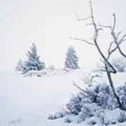 Winter On The Moor Art Print
