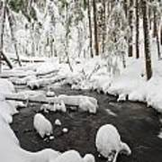 Winter Snow Along Still Creek In Mt Art Print