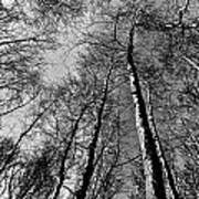 Epping Forest Trees Art Print