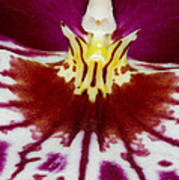 Exotic Orchid Flowers Of C Ribet Art Print by C Ribet