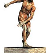 Male Musculature Art Print