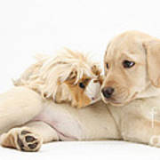 Puppy And Guinea Pig Print by Mark Taylor