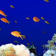 Underwater Landscape Art Print