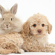 Puppy And Rabbit Art Print
