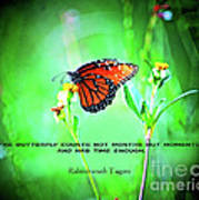 14- The Butterfly Art Print