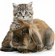 Kitten And Rabbit Art Print
