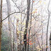 Autumn Monongahela National Forest Art Print