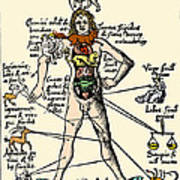 16th-century Medical Astrology Art Print by Cordelia Molloy