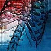 Torso Skeleton Art Print