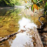 Fall Along Williams River Art Print