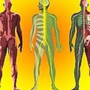 Human Anatomy ,artwork Art Print