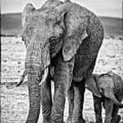 African Elephants In The Masai Mara Art Print