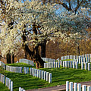 Arlington National Cemetary Art Print