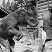 Bill Snyder, Elephant Trainer Art Print by Everett