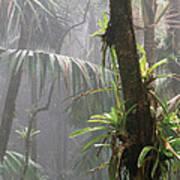 Bromeliads El Yunque National Forest Art Print by Thomas R Fletcher