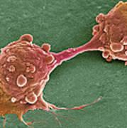 Cancer Cell Dividing, Sem Art Print