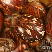 Castor Beans Art Print