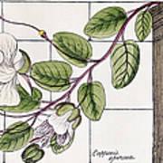 Colosseum: Flower Art Print