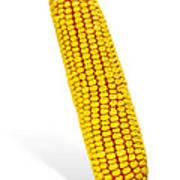 Corn Cob Art Print