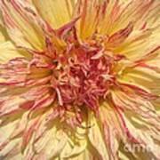 Dahlia Named Misty Explosion Art Print