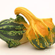 Decorative Squash Art Print