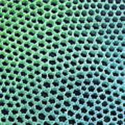 Diatom Cell Wall, Sem Art Print by Steve Gschmeissner