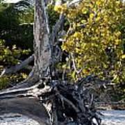 Driftwood On The Beach Art Print