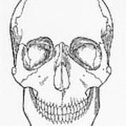 Illustration Of Anterior Skull Art Print