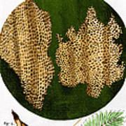 Illustration Of Cork Wood Cells Art Print