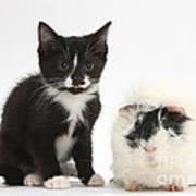 Kitten And Guinea Pig Art Print