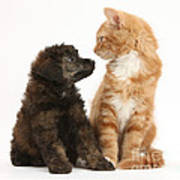 Kitten And Puppy Art Print