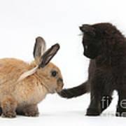 Kitten And Young Rabbit Art Print