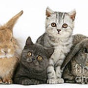 Kittens And Rabbits Art Print
