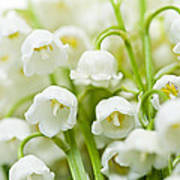 Lily-of-the-valley Flowers Art Print