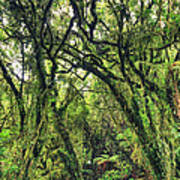 Native Bush Print by MotHaiBaPhoto Prints