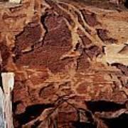 Natural Carvings Art Print