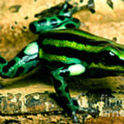 Pasco Poison Frog Art Print