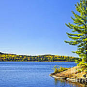 Pine Tree At Lake Shore Art Print