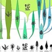 Plant Evolution, Diagram Art Print