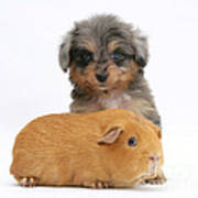 Puppy And Guinea Pig Art Print