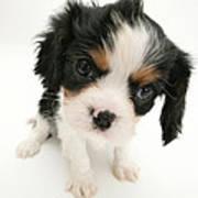 Puppy Print by Jane Burton