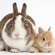 Rabbit And Baby Bunny Art Print