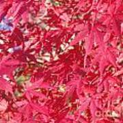 Red Leaves 2 Art Print