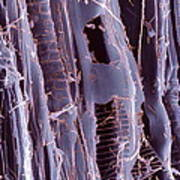 Rotten Wood, Sem Art Print by Dr Jeremy Burgess
