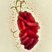 S. Maltophilia Bacteria, Tem Art Print