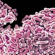 Salmonella Bacteria, Sem Art Print