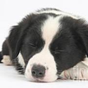 Sleepy Puppy Art Print