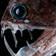 Sloanes Viperfish Art Print