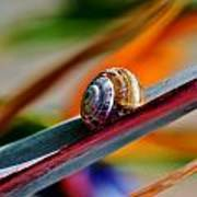 Snail On Stelitzia Reginae Art Print