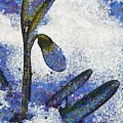 Snowdrop Art Print by Odon Czintos